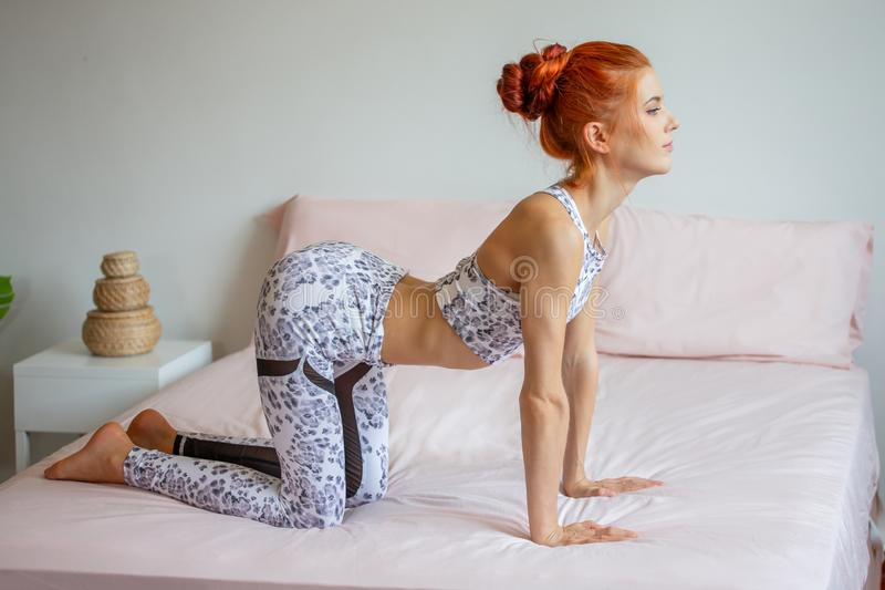 Young fitness woman in sportwear practicing yoga on bed in bedroom at home in Morning . sport girl doing cat - cow Pose exercise. Indoors. workout healthy royalty free stock photo