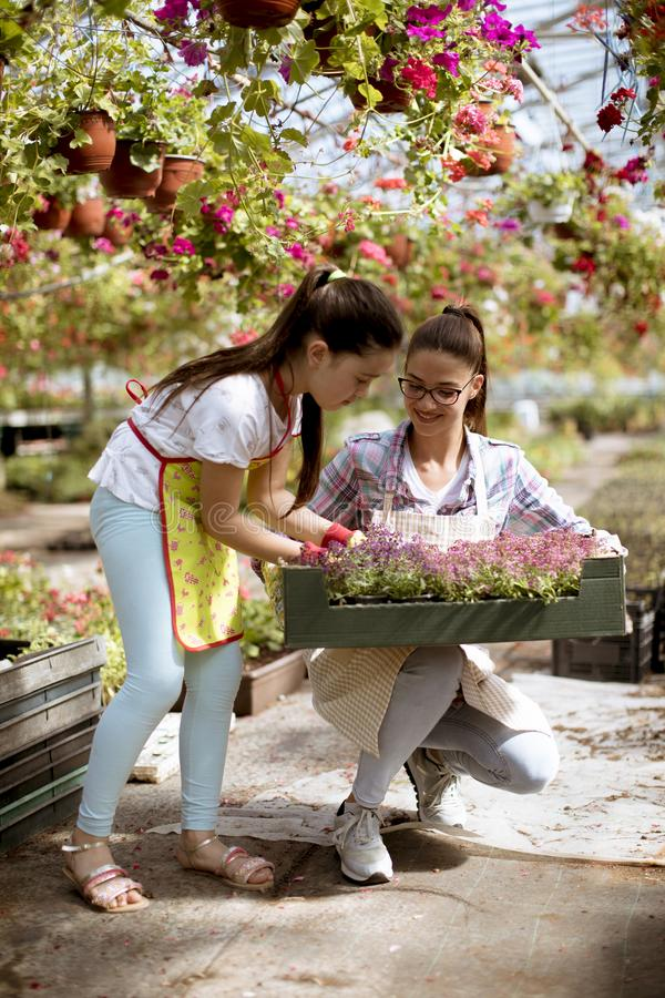 Young florists enjoying work in the greenhouse stock photo