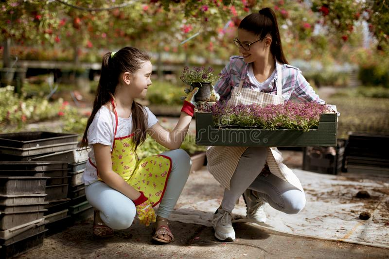 Young florists enjoying work in the greenhouse stock photos