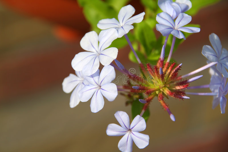 Download Young Flowers In A Spring Garden Stock Photo - Image: 4163948