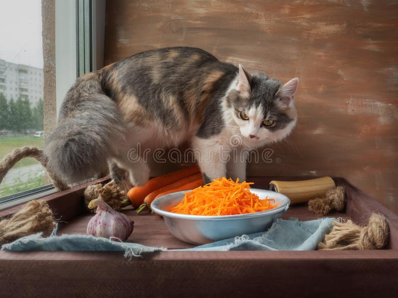 Young fluffy cat climbed on the table, to profit something tasty, but saw only a Cup of carrots stock photo