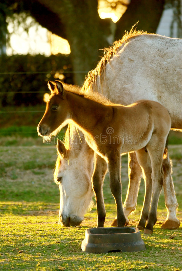 Free Young Foal With Mom Stock Photo - 4368980