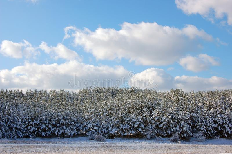 First snow. Young forest along the road at the entrance to Sevastopol.Crimea royalty free stock photography