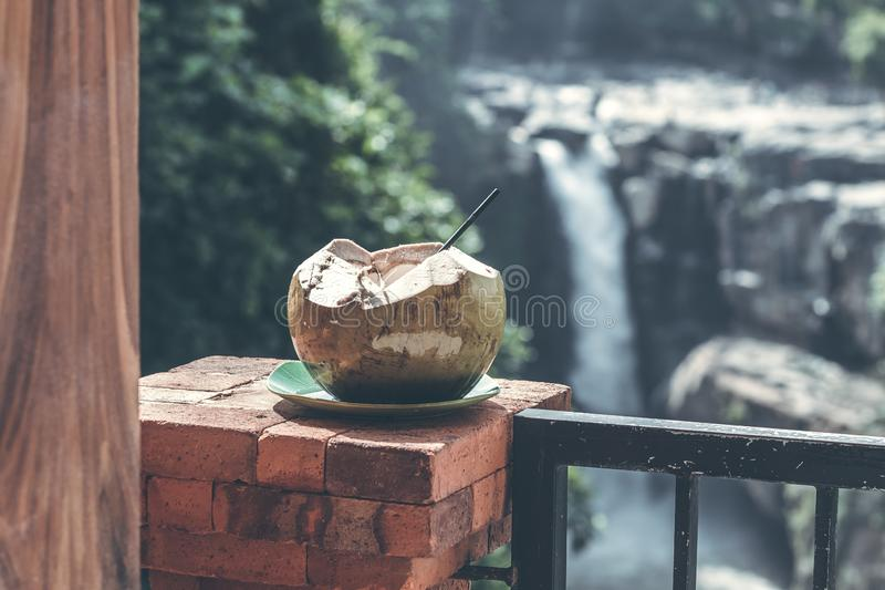 Young fresh organic coconut on a waterfall background in the jungle of Bali island. stock photos