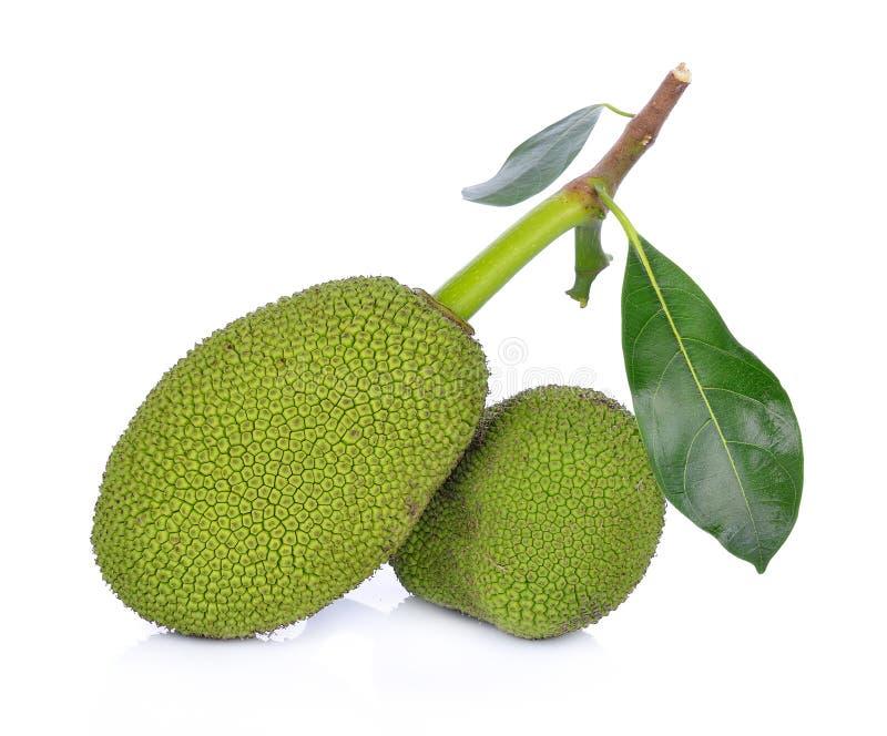 Young fruit jackfruit on white background royalty free stock image