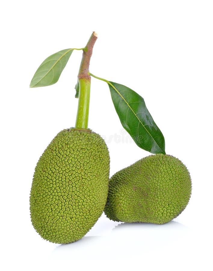 Young fruit jackfruit on white background stock image
