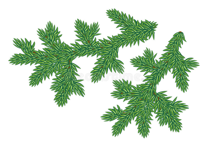 Download Young fur-tree branches stock vector. Image of larch, image - 3375112