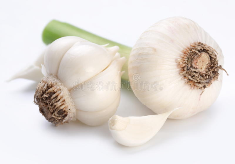 Young garlic royalty free stock photography