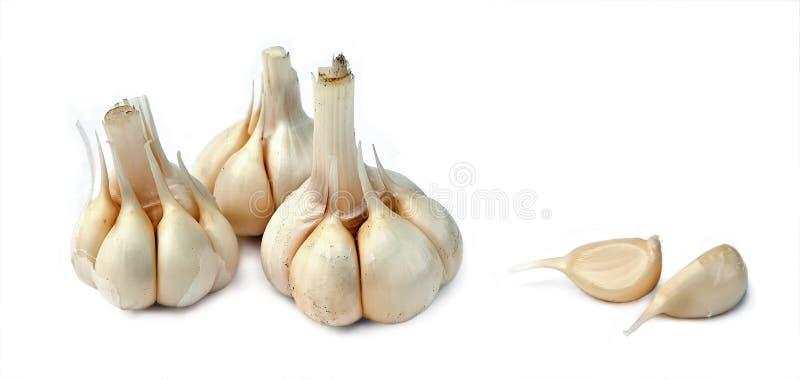 Young garlic royalty free stock photos