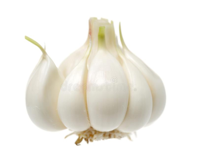 Young garlic. Isolated on white background royalty free stock image