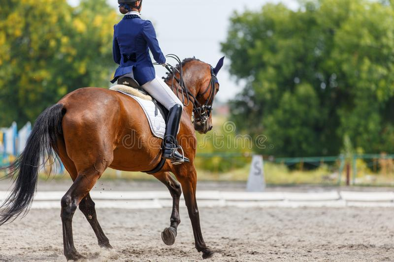 Young girl on bay horse performing dressage test. Young girl on bay horse performing her dressage test stock images