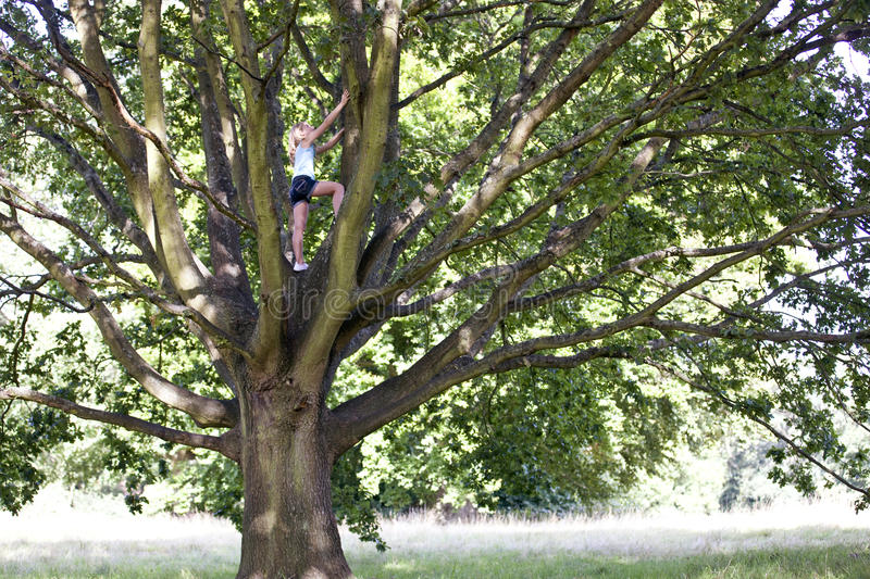 A young girl climbing a tree stock image