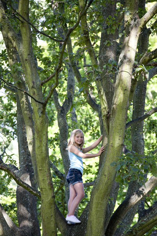 A young girl climbing a tree royalty free stock image