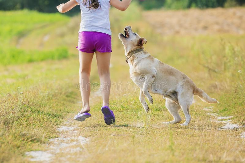 A young girl with a dog runs along a country road. In a field in summer. The girl holds in her hand a ring for training stock photo