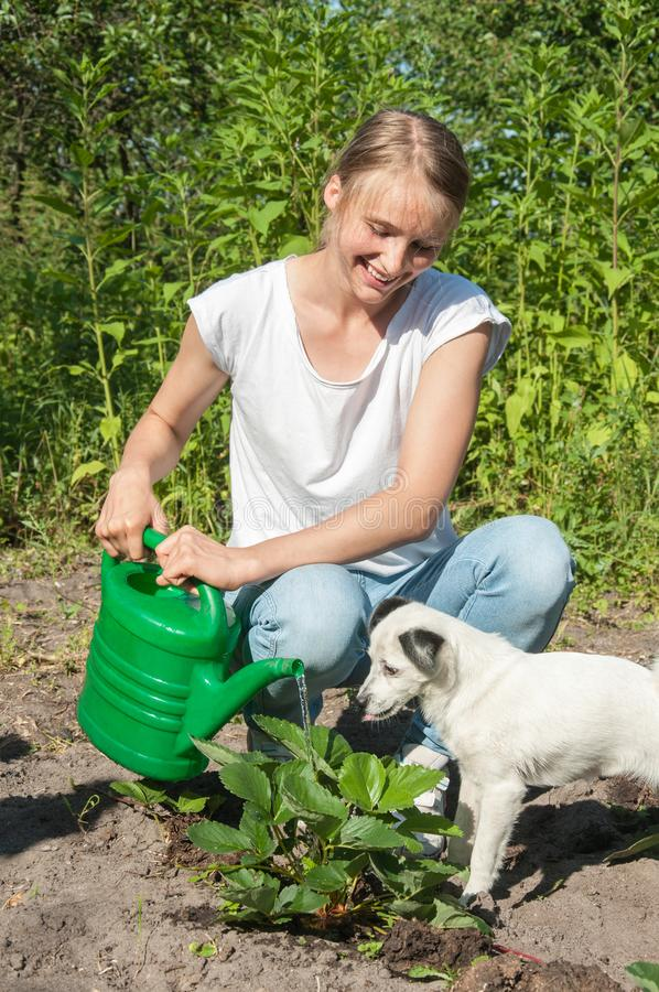 Young girl with a dog watering plants royalty free stock images