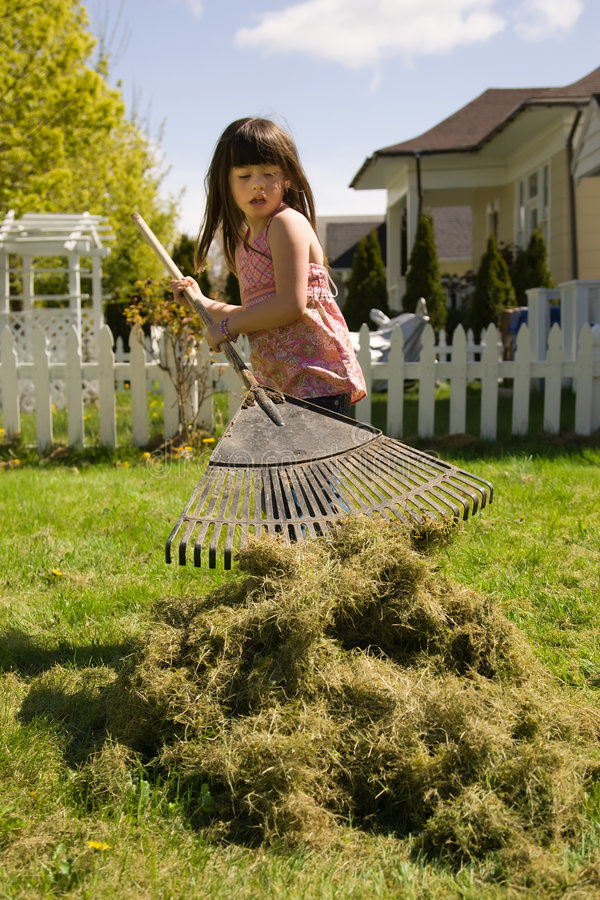 Young girl earning allowance. Young girl working in the yard raking grass to earn allowance royalty free stock photography
