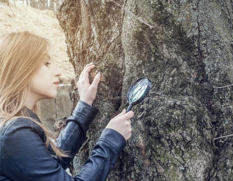 Young girl examines objects on a tree bark through a magnifying glass royalty free stock photography