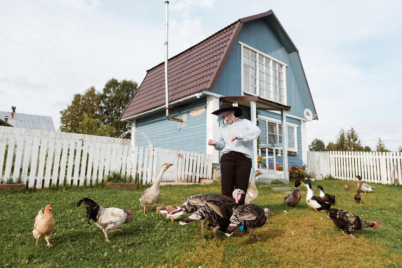 A young girl feeds domestic birds, ducks, hens, geese, turkeys in the yard of a rural house. stock photography