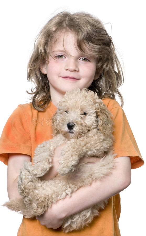 Young girl with her toy Poodle puppy (9 weeks old). In front of a white background royalty free stock images