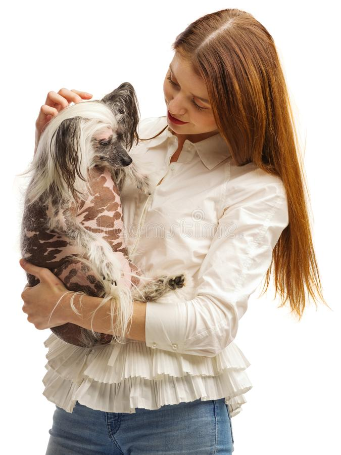 Young girl holding a Chinese Crested dog in her arms. Isolated on white background. Indoors. royalty free stock photo