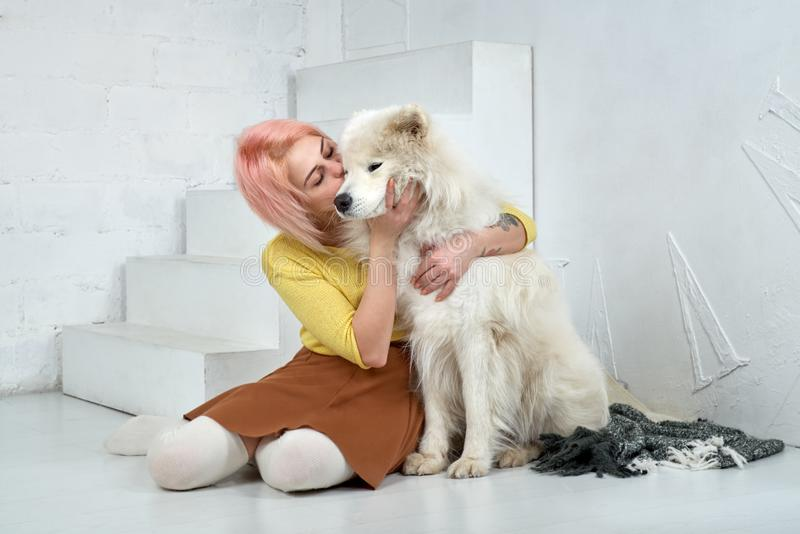 Young girl kissing and hugging a large white friend dog Samoyed. The girl is happy that the dog learned few training and commands stock photos