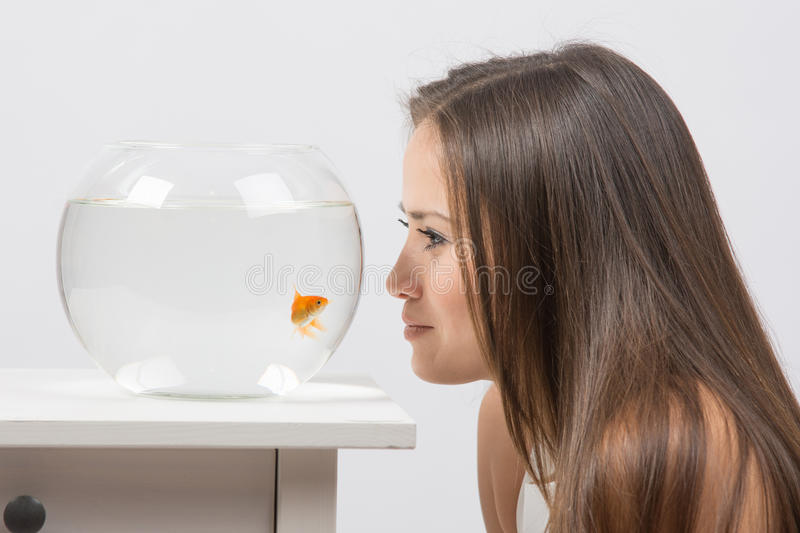 Young girl leaning face to the aquarium and looking at goldfish. A young girl sits next to a round aquarium in which swimming goldfish stock photos