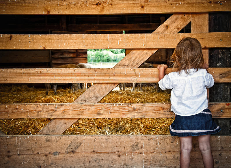 Young girl looking into animal pen royalty free stock photos
