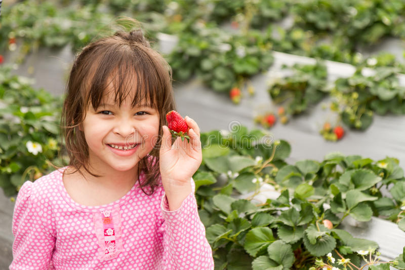 Young Girl Picking Strawberry stock photography