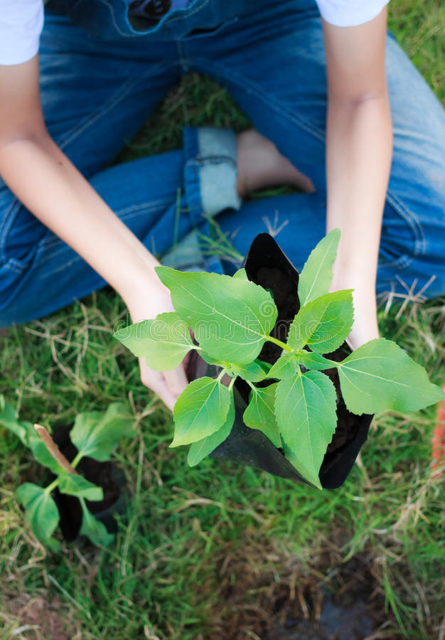 young girl planting stock image