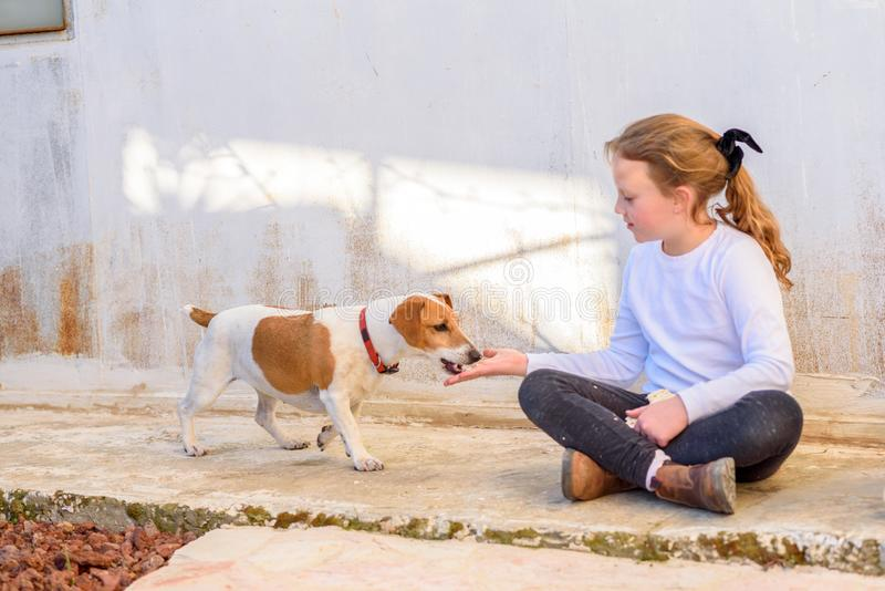 Young girl playing with pet dog jack russell terrier outdoor. stock image