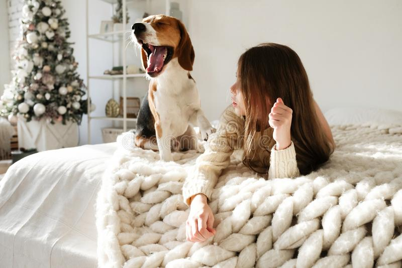 Young girl plays with her dog on the bed. Beagle and girl laugh together. Funny dog and pretty caucasian girl stock images