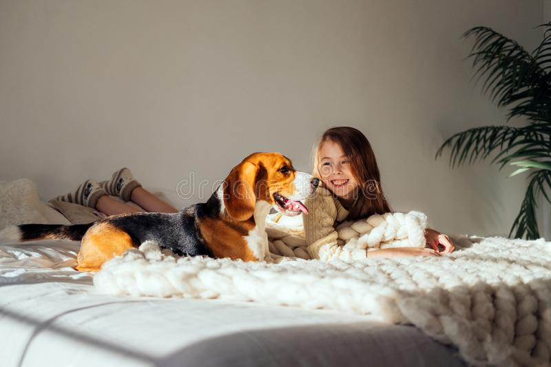 Young girl plays with her dog on the bed. Beagle and girl laugh together. Funny dog and pretty caucasian girl stock photo