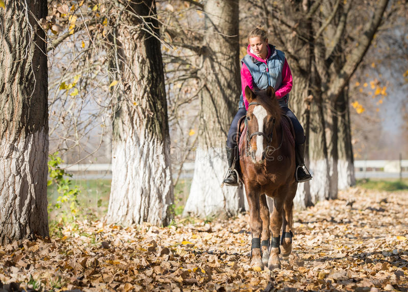 Young girl riding horses. Through the forest royalty free stock photography