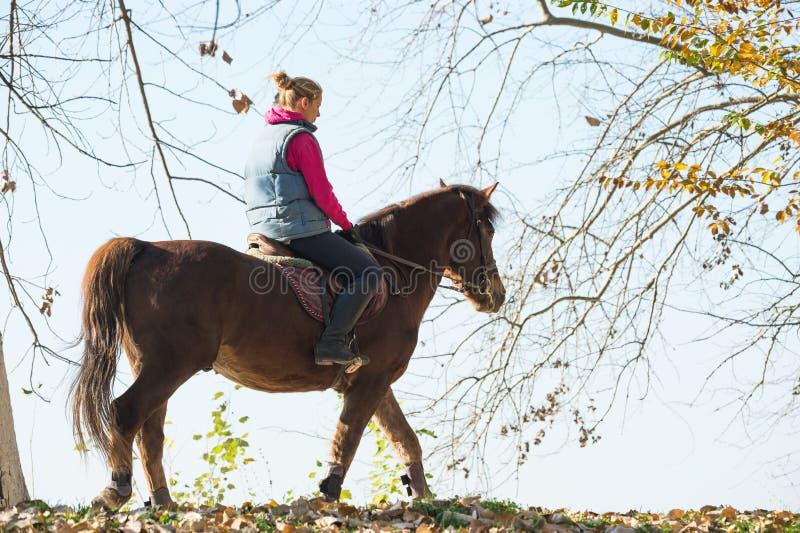 Young girl riding horses. Through the forest stock photos