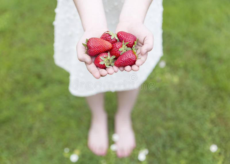 Young girl showing her hands full of Strawberries royalty free stock photography