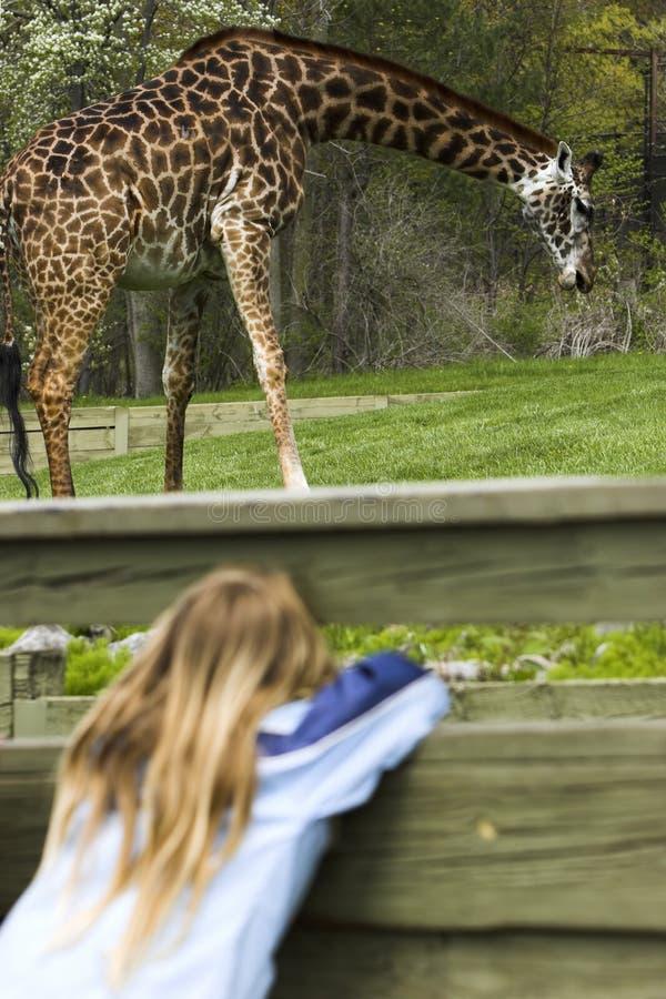 Young girl spying a giraffe