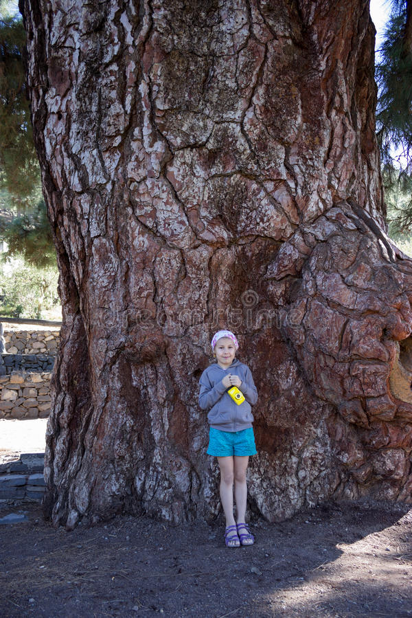 Young girl standing near stem of thousand-year giant pine with camera in hand. Vilaflor village, Teno mountain, Tenerife, Canary, royalty free stock photos