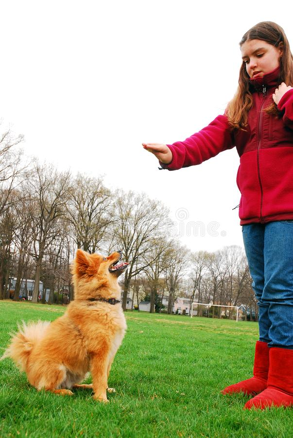 A young girl trains her dog at a park. A young girl trains her dog to sit and stay at a park royalty free stock image