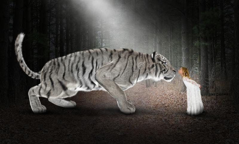 White Tiger, Imagination, Nature, Kiss. A young girl uses her imagination to play with a white tiger in nature. She is giving the wildlife animal a kiss stock images