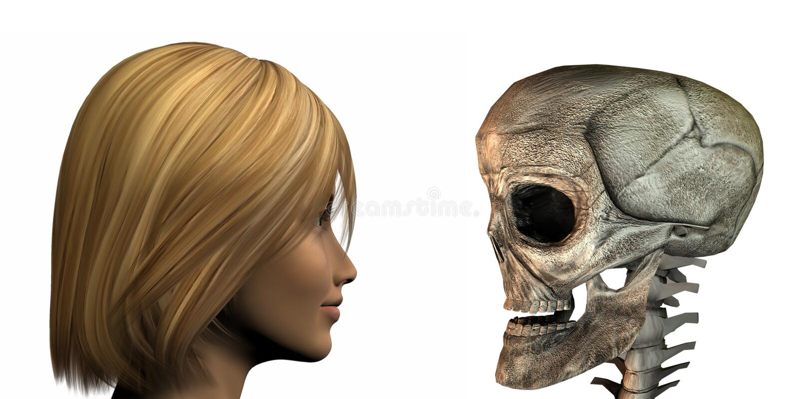 Young girl vs old skull isolated on a white