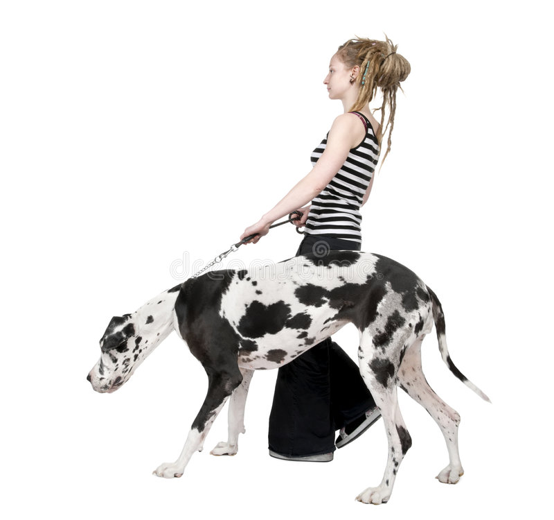 Free Young Girl Walking His Dog (Great Dane 4 Years) Ha Royalty Free Stock Photos - 8555038