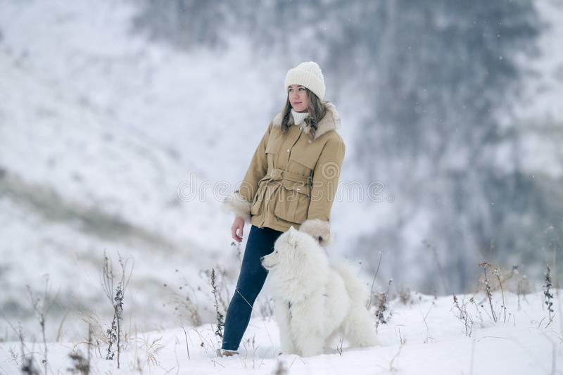 A young girl walks in winter with a white Samoyed dog in a snowy meadow in the forest stock photo