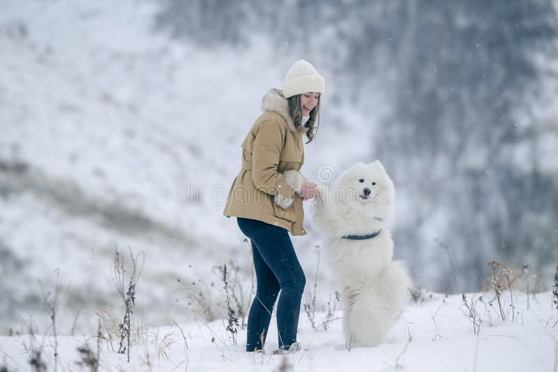 A young girl walks in winter with a white Samoyed dog in a snowy meadow in the forest stock photography