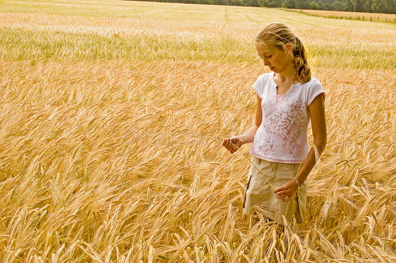 Young girl in wheat field. Young blond girl in wheat field examining the crop stock photography