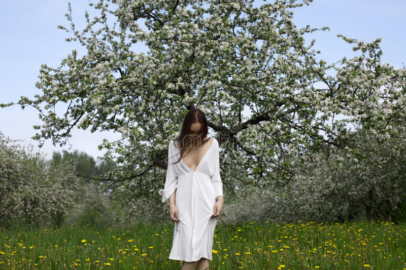 Young girl in white dress near blooming apple tree stock images