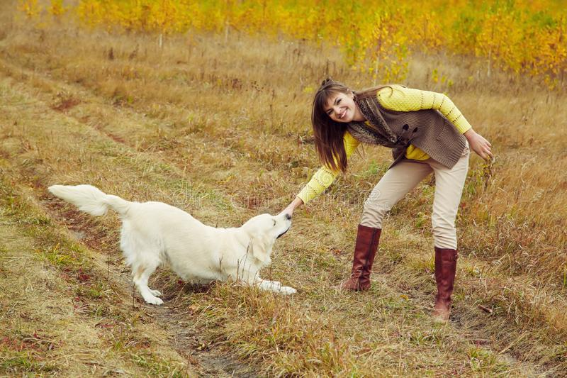 Young golden retriever for a walk with his owner. Dog breed labrador with woman outdoors. royalty free stock images