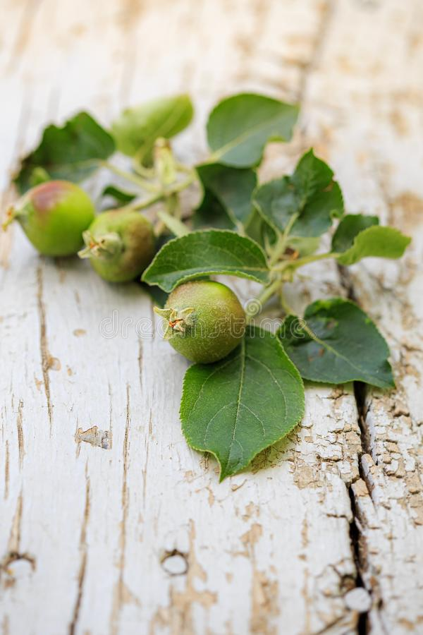 Young green apples on a wooden light background stock images