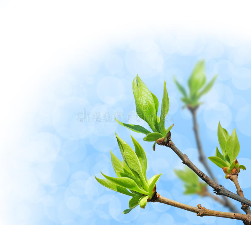 Download Young green leaves stock image. Image of foliage, tree - 18071385