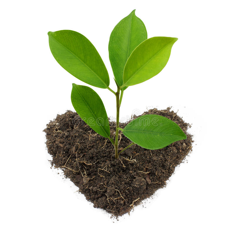 Young Green Plant. royalty free stock photography