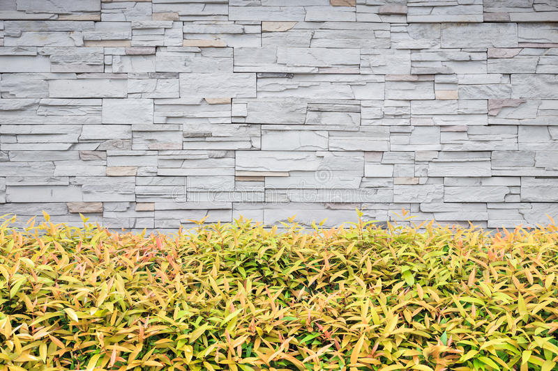 Young Green Plant. Garden Decorative And Stone Wall Background Stock ...